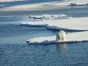 Healy Aug 24 2015 Polar-Bear VI Tim Kenna
