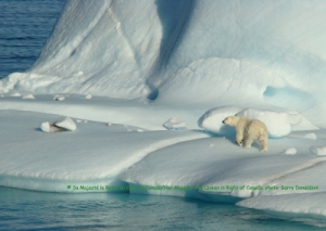 Polar bear on ice_SARA registry webpage_gov Can