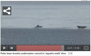 Underwater stalk_01