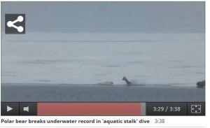 Underwater stalk_03