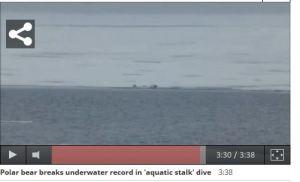 Underwater stalk_04 seals in the water