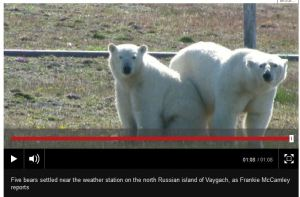 Beseiged by bears Russia BBC video Sept 1 2015
