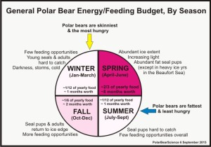 Polar bear feeding budget_PolarBearScience_6Sept2015