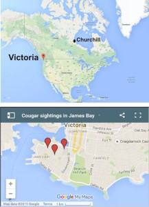 Victoria cougar location Oct 5 2015