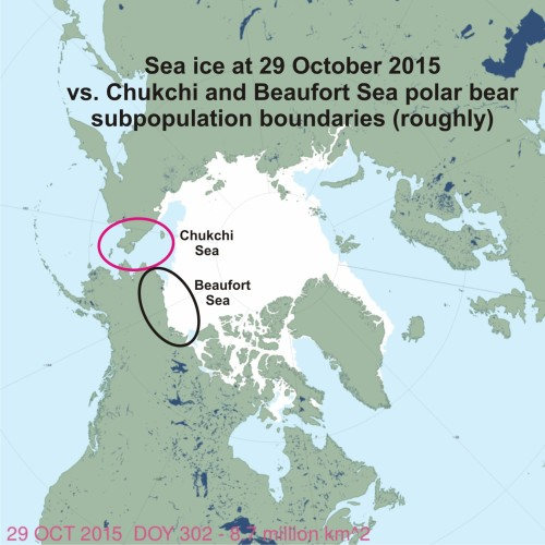 Chukchi vs Beaufort ice at 29 Oct 2015_polarbearscience