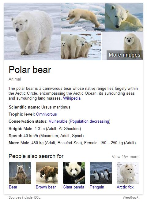EOL_polar bear_at 21 Dec 2015 listed by Google
