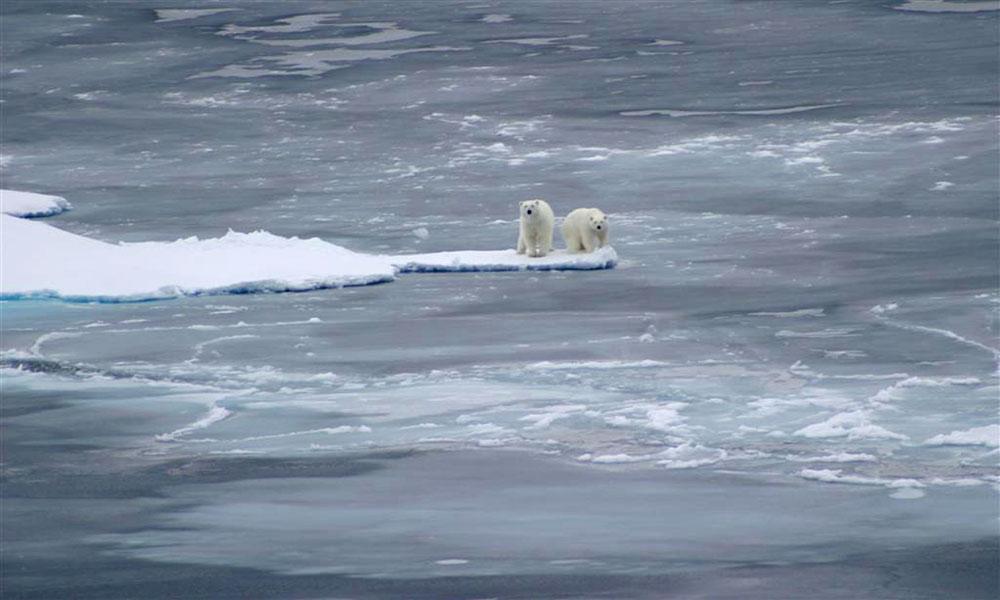polar-bears-3-large_USGS