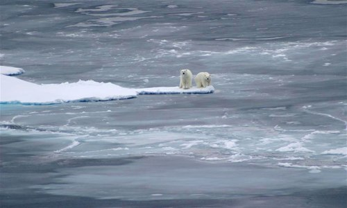 polar-bears-3-large_USGS