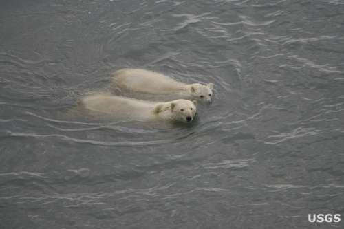 swimming3_USGS