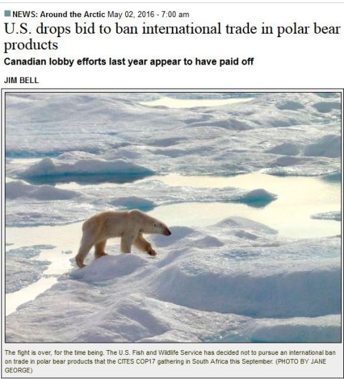 CITES 2017 US drops bid to ban polar bear trade_2 May 2016