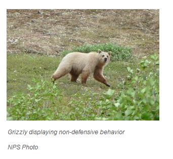 Grizzly light_NPS photo