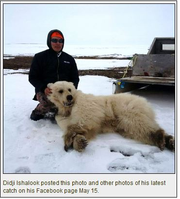 hybrid-bear_didji-ishalook-15 May2016_facebook
