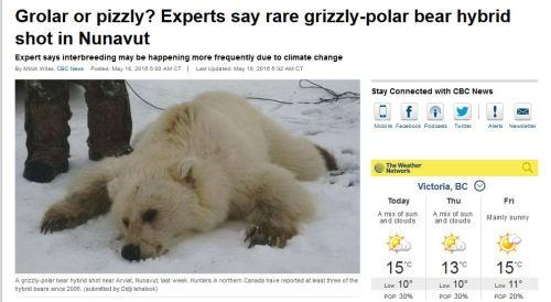 Hybridization Polarbearscience