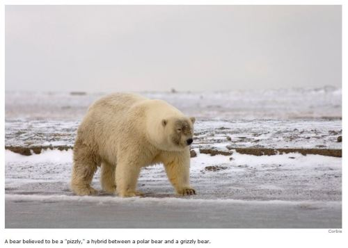 Hybrid sightings Canada Spiegel_2012 lead photo