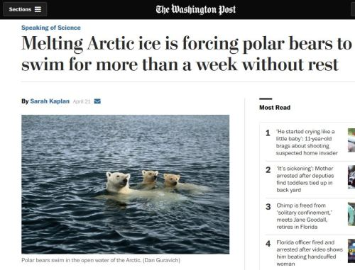 Washington Post_swimming polar bears_snapshot 21 April 2016