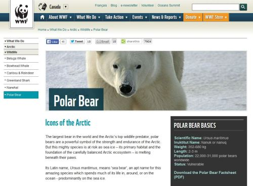WWF Canada_polar bear at 14 May 2016