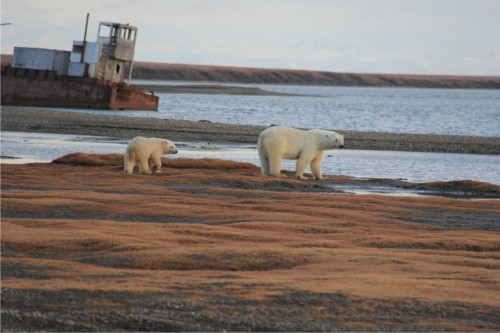 Kaktovik female w cub_21 September 2015 USDA_med