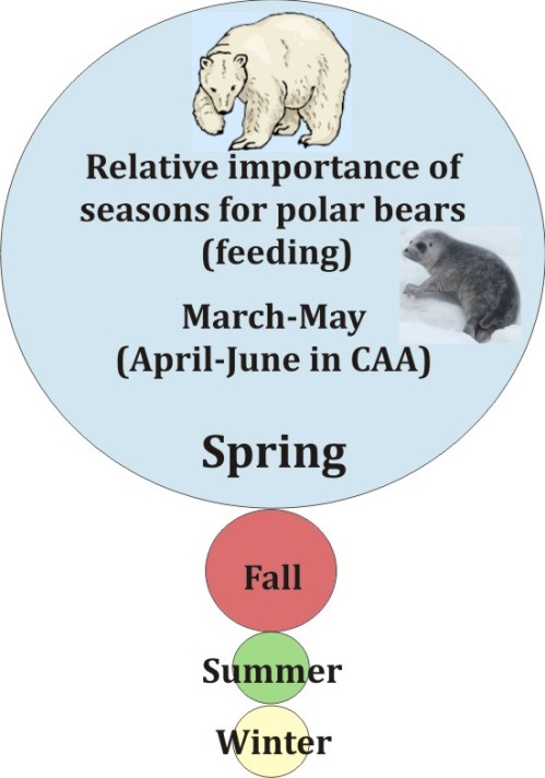 Relative importance of seasons polar bear graphic_PolarBearScience_June2016