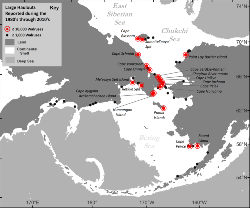 walrus haulout data-USGS 31 July 2016 NPR