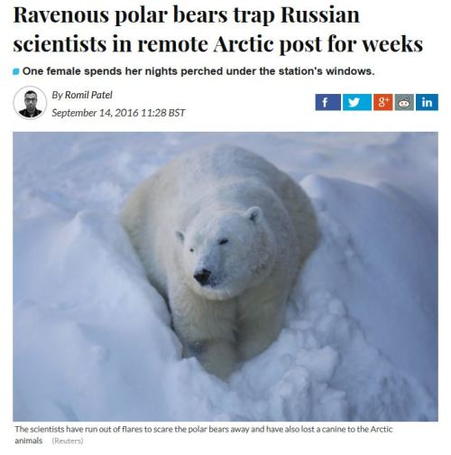 russian-scientists-trapped-by-polar-bears-14-sept-2016_ib-times