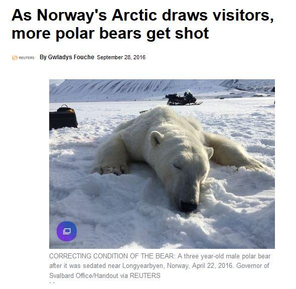 svalbard-more-visitors-more-bears-shot_28-sept-2016-yahoo