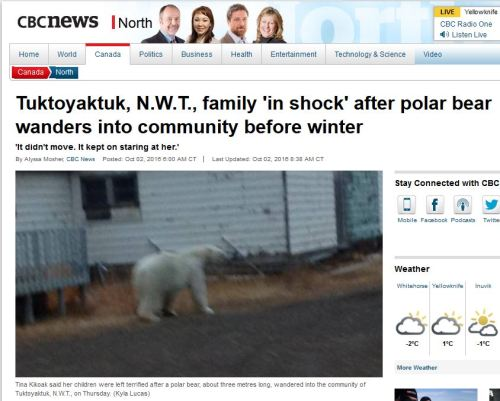 tuk-polar-bear-sighting-sept-29_cbc-oct-1-2016-headline