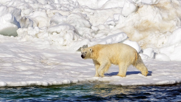 polar-bear-habitat_usgs-from-cbc-story-sept-19-2015