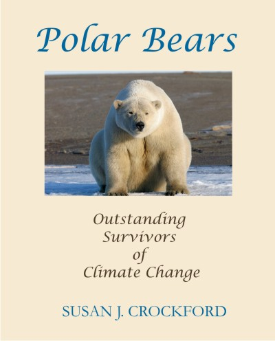 short essay on polar bears