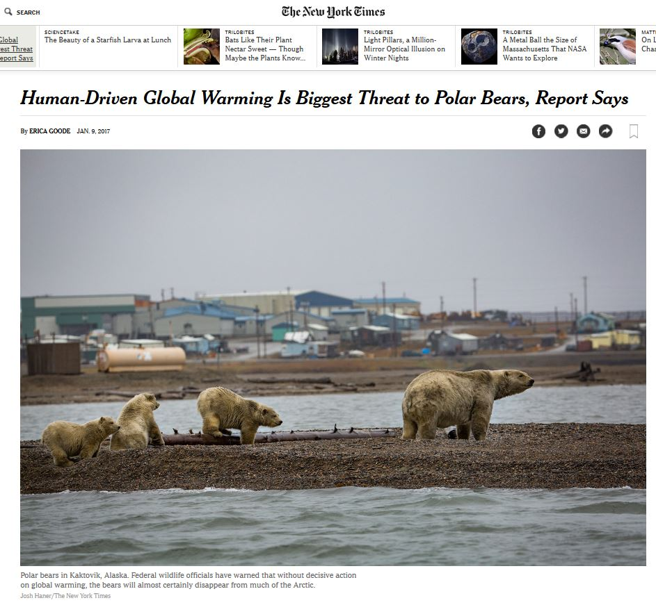 biggest-threat-to-polar-bears-is-global-warming-nyt-headline_9-jan-2017