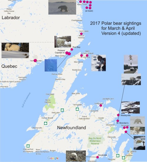 East Coast March April polar bear sightings 2017 V4_22 April_PolarBearScience