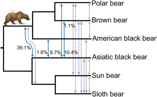 Kumar et al 2017 hybridization in bear evolution_fig 4