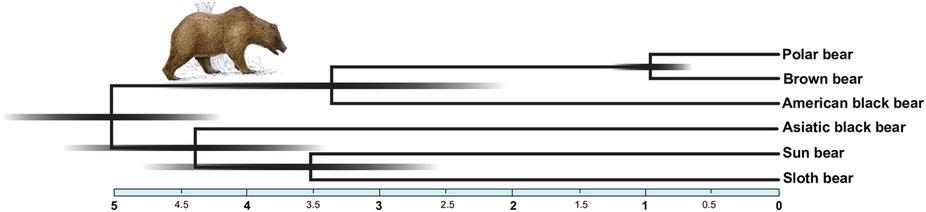 Kumar et al 2017 hybridization in bear evolution_fig 5