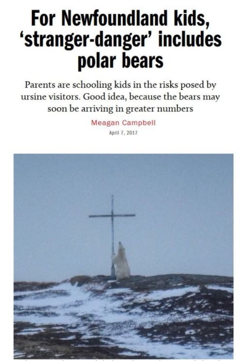 Macleans 7 April 2017 polar bear headline with photo_sized