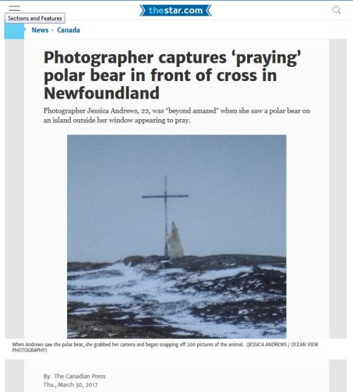 Wesleyville nfld praying bear_THE STAR 30 March 2017 headline