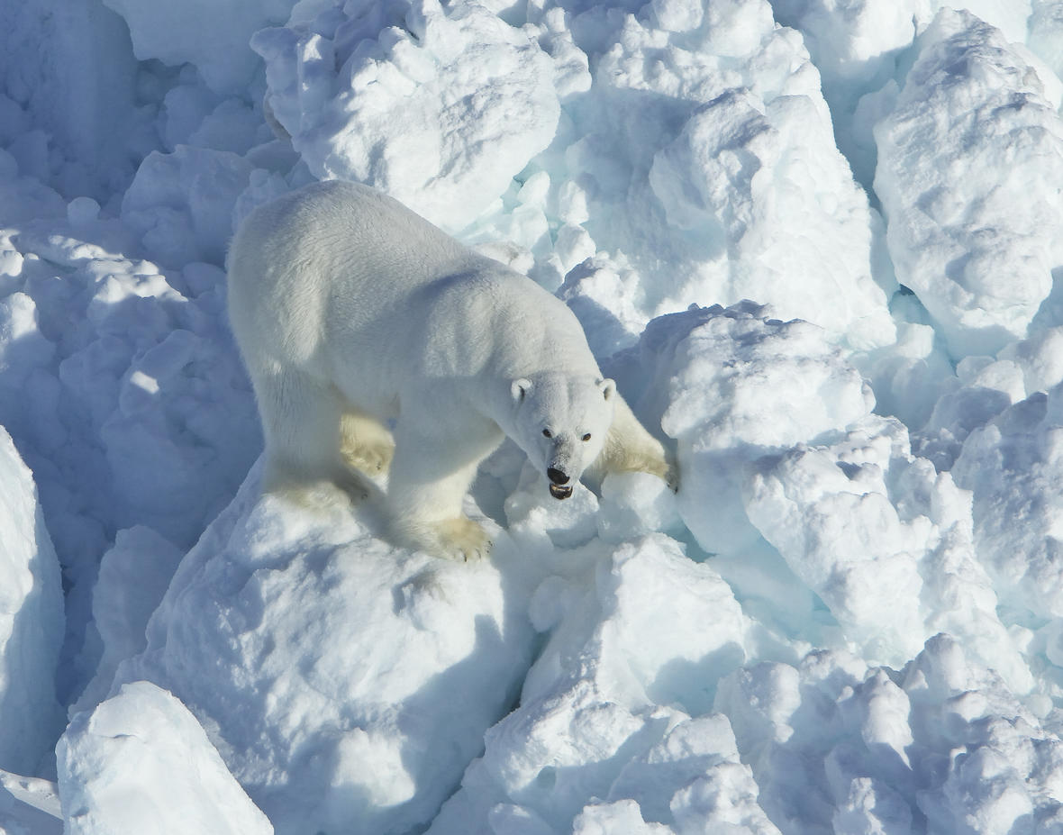 polar_bear_rubble_ice_Mike Lockhart USGS_8 April 2011
