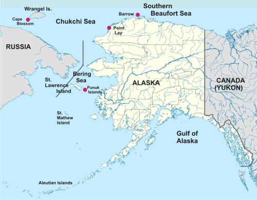 Chukchi Beaufort Walrus map_PolarBearScience