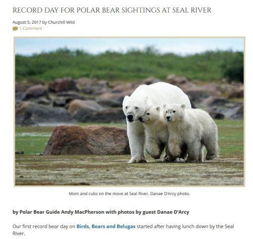 Seal River polar bear report for 2017 Aug 5