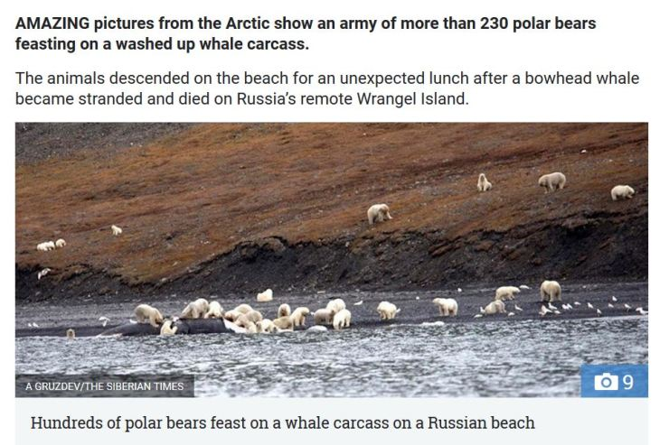 Wrangel Island bears on whale_29 Sept 2017 SUN