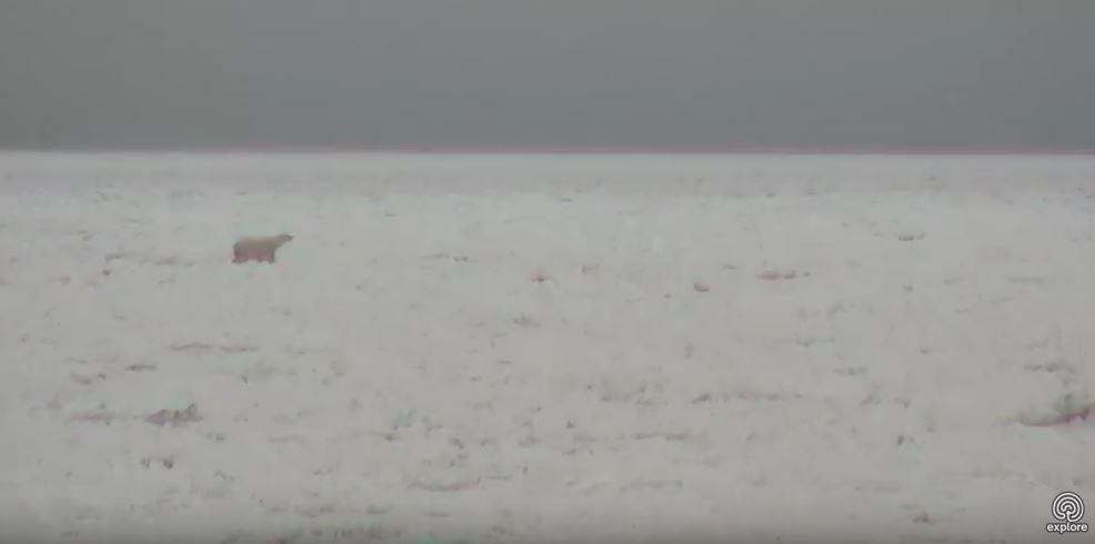 Polar bear on the sea ice_Churchill_8 Nov 2017_Explore dot org cam my photo 2