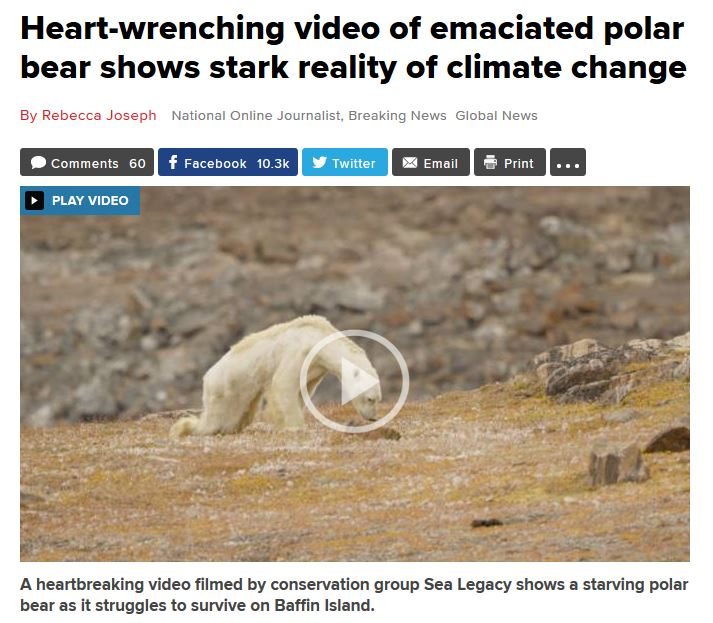 polar bears warming up to climate change essay Please cite this article in press as: dyck, mg et al, polar bears of western hudson bay and climate change: are warming spring air temperatures the ''ultimate'' survival control factor, ecol complex.