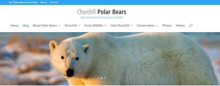 Churchill Polar Bears dot org_header