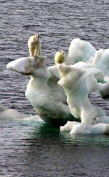 polarbrs iceberg Daily Mail 010207_468x762