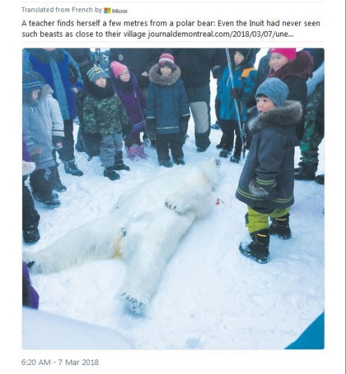 puvirnituq_tweet-polar-bear_7-march-2018_translated.jpg