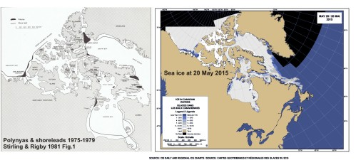 Polynyas and shore leads vs sea ice at 20 May 2015_PolarBearScience