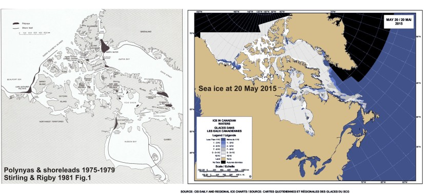 Polynyas and shore leads vs sea ice at 20 May 2015_PolarBearScience