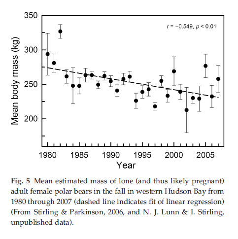 stirling and derocher 2012 fig 5?w=500 critical evidence on w hudson bay polar bears still not published