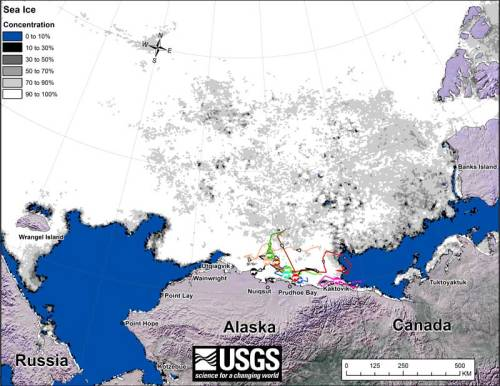 Beaufort tracking USGS bear-movements-June 2018 sm