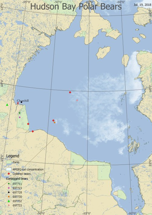 Derocher 19 July 2018 position of collared females on Hudson Bay