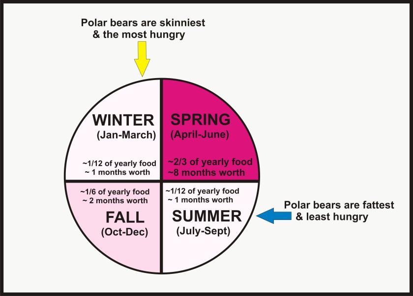 Polar bear feeding by season simple_Nov 29 2015