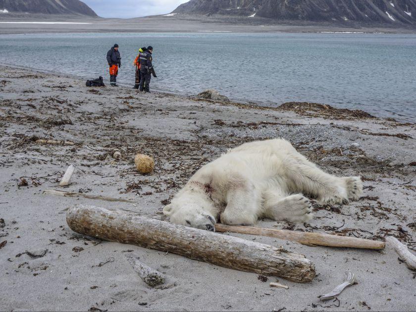 Svalbard dead bear_Gustav Busch Arntsen_Governor of Svalbard_NTB Scanpix via AP 28 July 2018